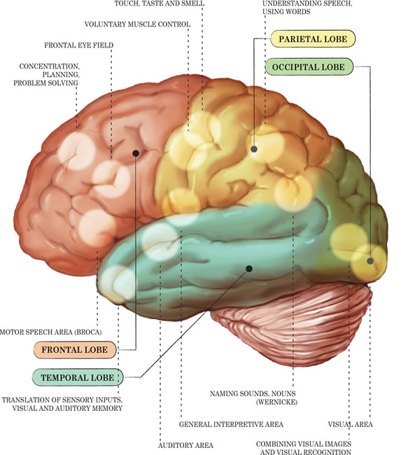 Each aspect of life is controlled by one or more brain function. If any one brain function is faulty, for any reason, then the whole skill or behavior is affected. Conversely, as more and more brain functions work better and better, your loved one will develop more and more in his/her skills, behaviors, emotions, patterns, etc.