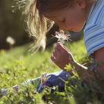 Pick up fresh flowers for Sensory Enrichment Therapy