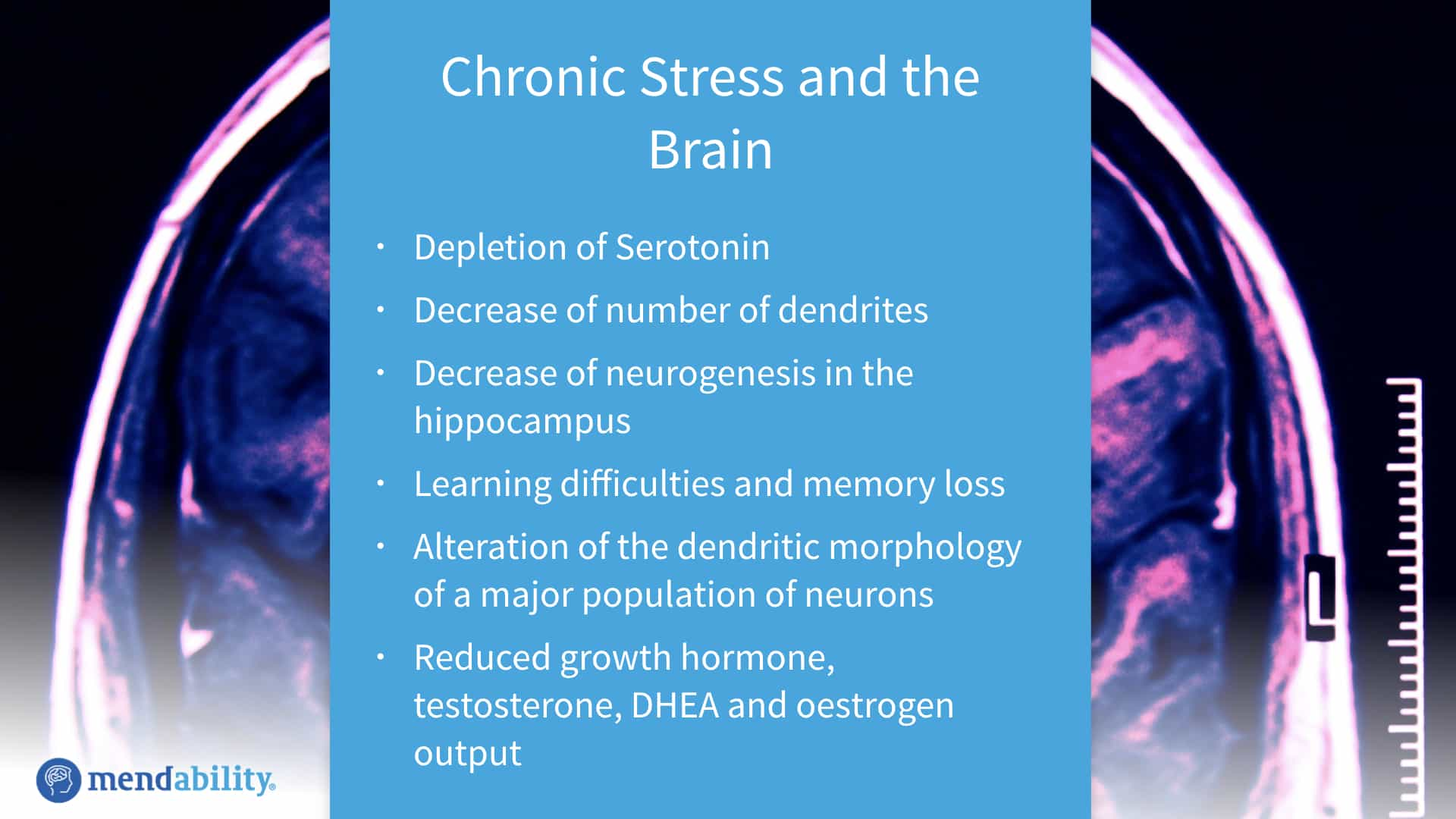 Neurological effects of chronic stress and cortisol