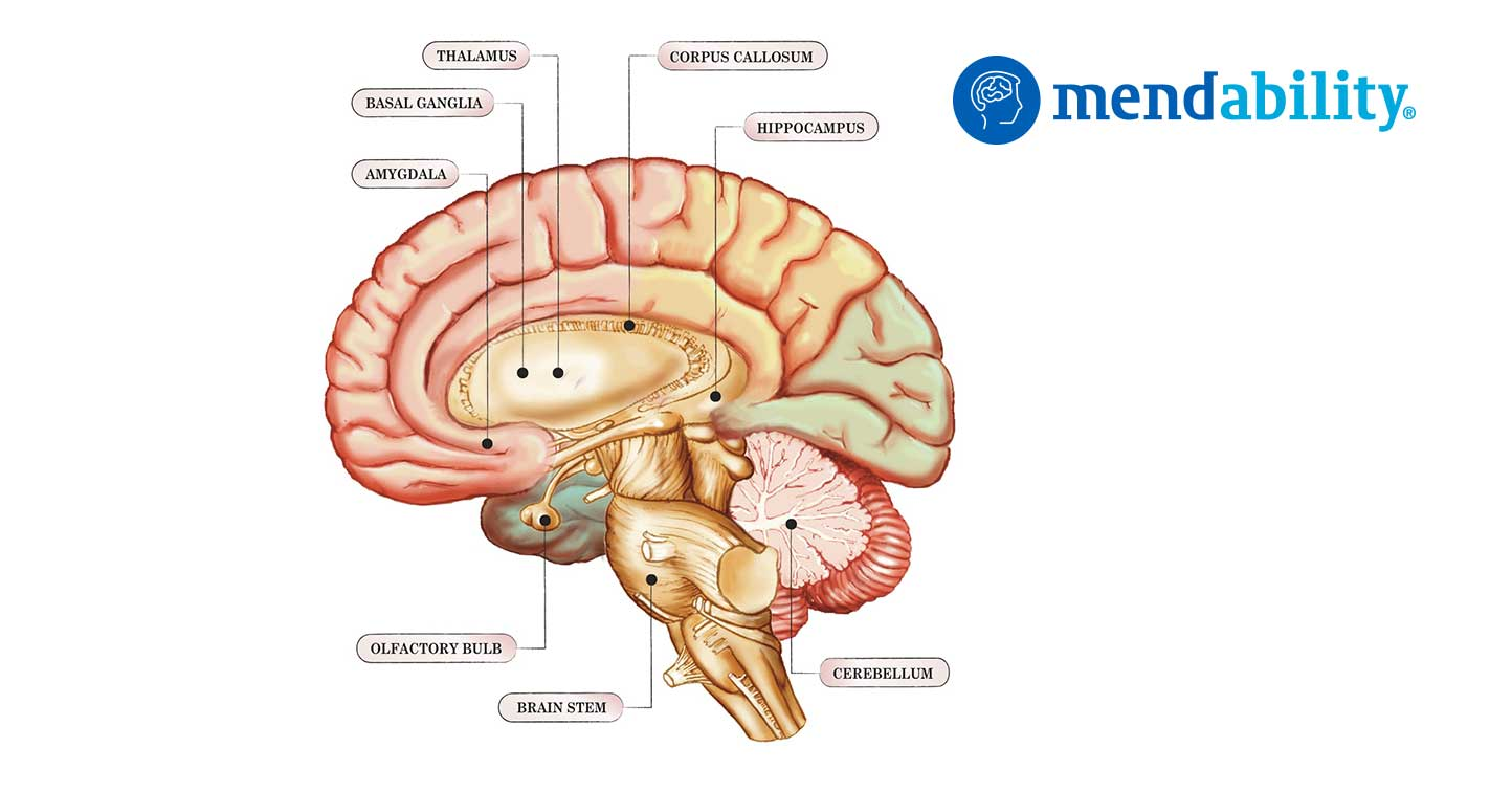 The cerebellum coordinates eye and hand tracking movements