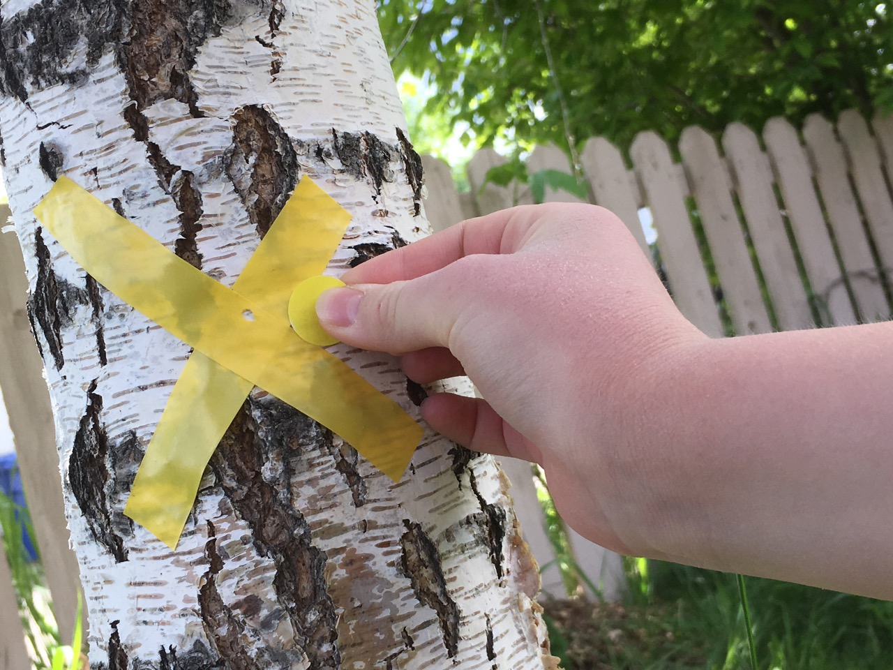 Activities for Autism: Outdoor Sticker Game. Matching colored dot stickers with colored X's on objects around your yard.