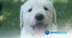 watching cute puppies improves cognition